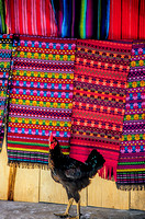 """Rooster and Matching Blankets""  Northern Guatemala"